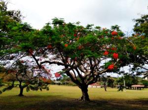 Парк на пляже Ypao Beach Park